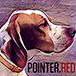 76-пойнтер собака