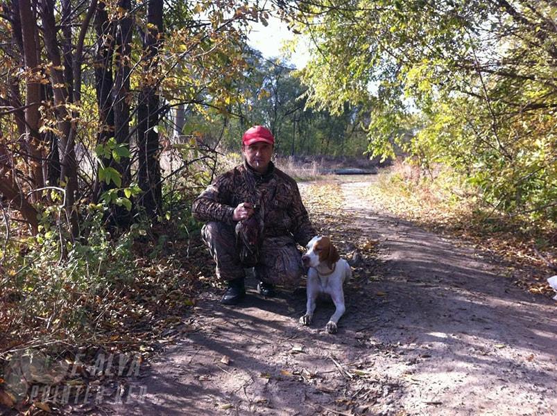 Фазан Осення охота с легавыми 2016