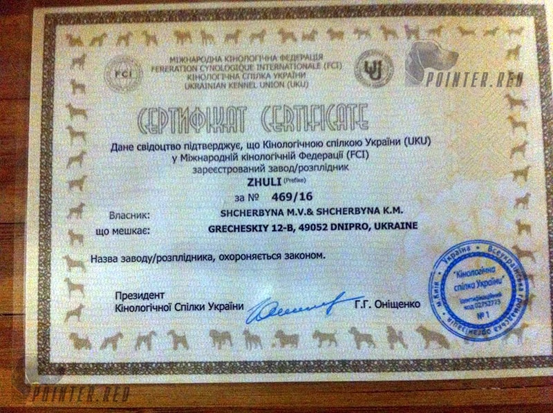 Питомник Zhuli английский пойнтер Днепр Украина