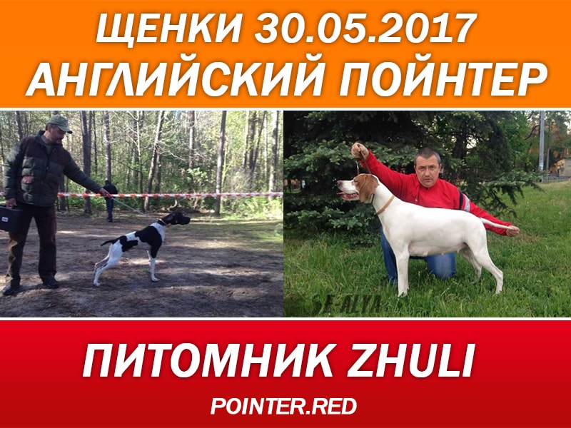 Питомник-Zhuli-щенки-английский-пойнтер-купить-Днепр-Украина