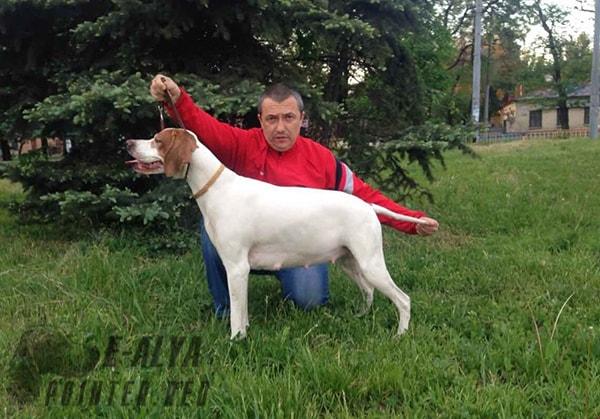щенки-английский-пойнтер-мать-E-Alya-Днепр-Украина-