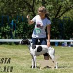победительница G-Asta Выставка пойнтер сеттер Днепр 2018-min
