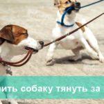 Как отучить собаку тянуть поводок на прогулке-min