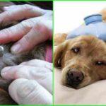 клещи на собаках симптомы и лечение-min