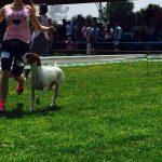 хендлер с собакой на выставке