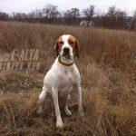 осенняя охота с собакой