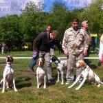 выставка собак 2015 Днепр Украина