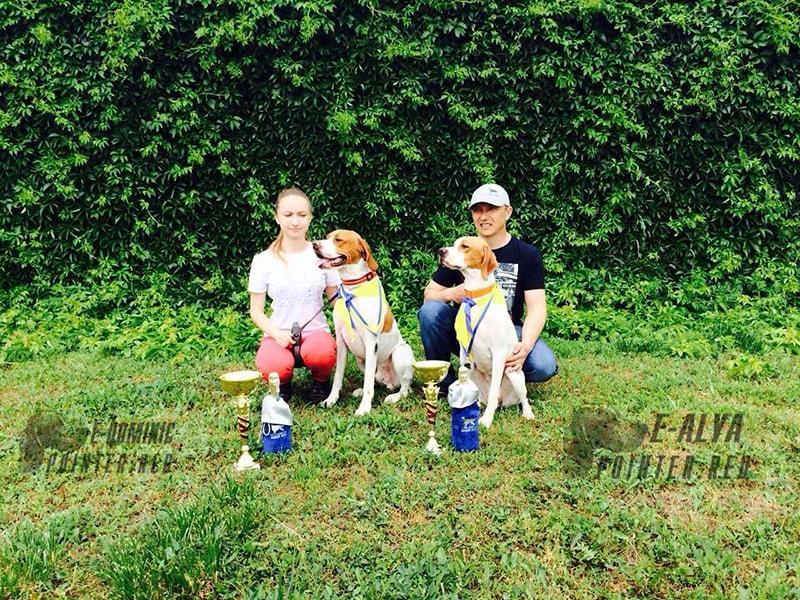 английский пойнтер на выставке собак