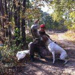 Английский пойнтер и охота на зайца 2016