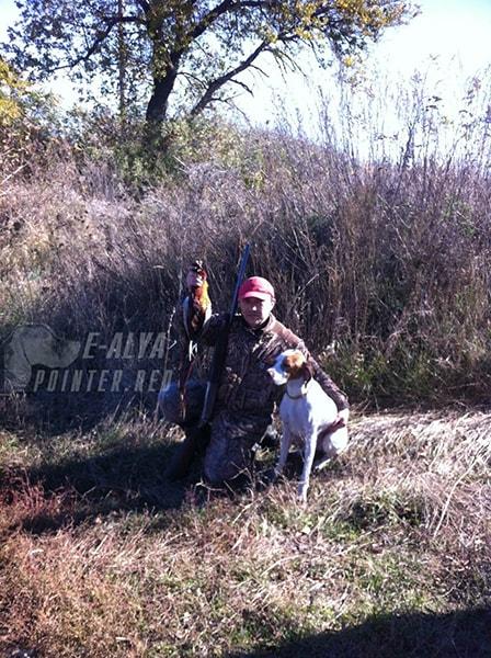 осеняя охота фазан дичь