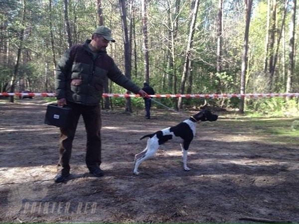 щенки-английский-пойнтер-отец-Daks-Полтава-Украина